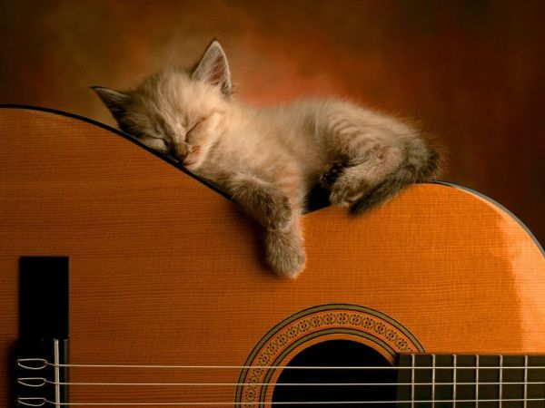 cat asleep on guitar