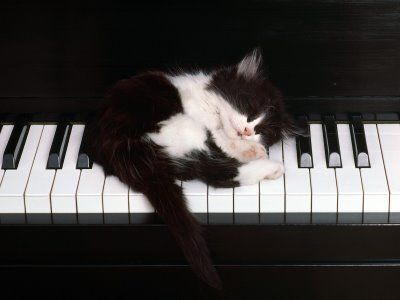 cat asleep on a piano